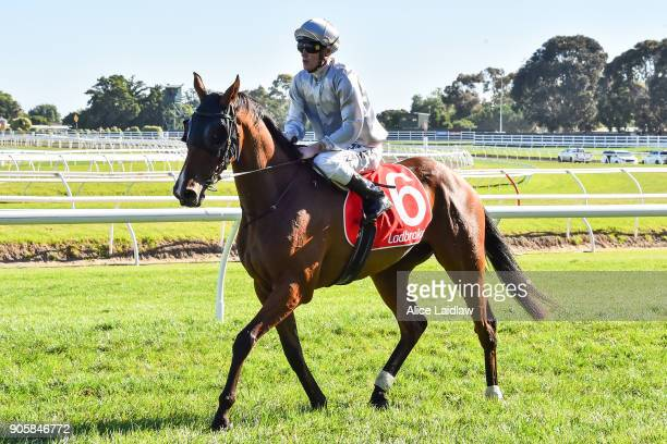 Bedford ridden by Mark Zahra returns to scale after winning the Ladbrokes Up For The Challenge at Caulfield Racecourse on January 17 2018 in...