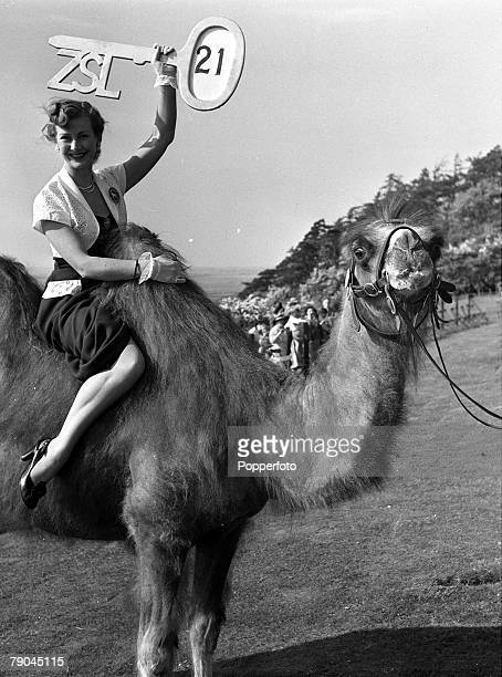 1952 Bedfordshire England British actress Dinah Sheridan is pictured holding a large key with 21 on it as she rides a camal at the 21st birthday...
