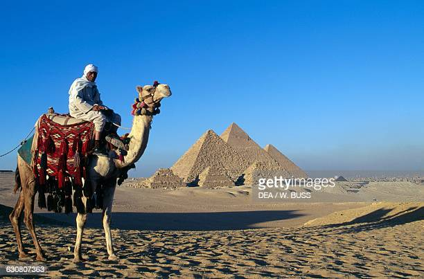 Bedouin atop a camel in front of the pyramids of Cheops Chephren and Menkaure Giza Plateau Egypt