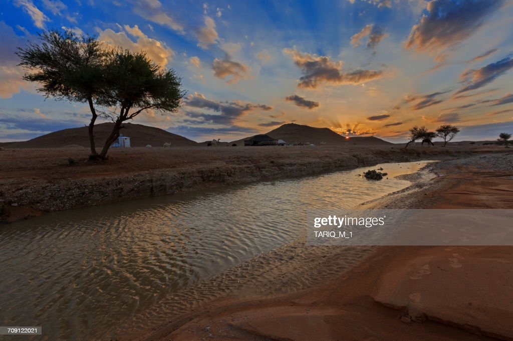 Bedouin camp and camels by water hole, Arabian Desert, Saudi Arabia : Stock Photo