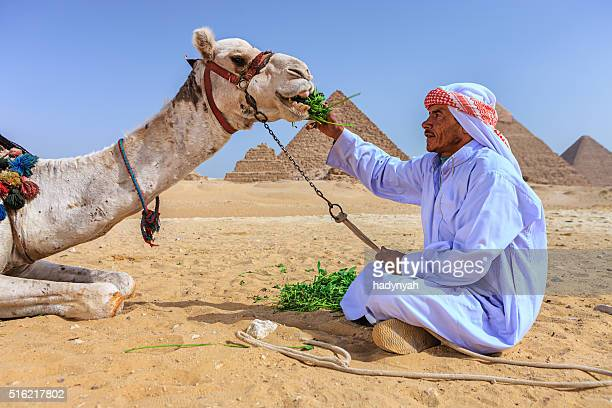 Bedouin feeding his camel, pyramids on the background, Egypt