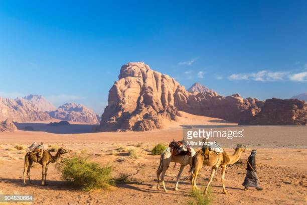 bedouin leading three camels through the desert, rocks and mountains in the distance. - bedouin stock pictures, royalty-free photos & images