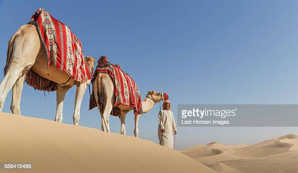 bedouin leading two camels in desert, dubai, united arab emirates - uae heritage stock photos and pictures