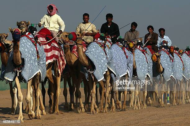 Bedouin men move camels between farms on February 6 2015 in Sweihan City Abu Dhabi Emirate United Arab Emirates Abu Dhabi is the capital of the...