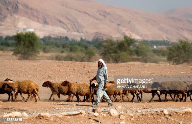 A Bedouin shepherd walks with his herd of sheep in the Jordan Valley in the Israelioccupied West Bank on September 11 2019 Israeli Prime Minister...