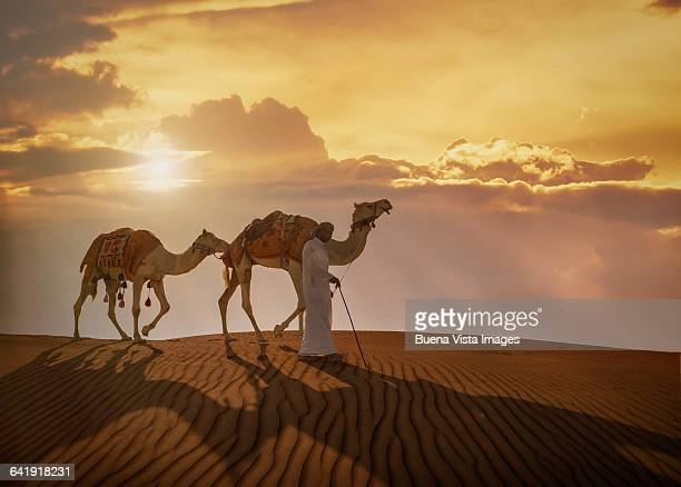 A bedouin with camels in a desert