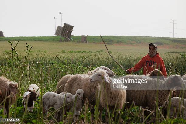 A Bedouin woman walks with her sheep near a Iron Dome missile defense system rocket emplacement on March 13 2012 near Ashdod Israel A ceasefire is in...