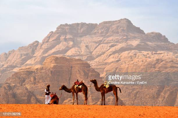 beduin in the desert with camels and mountains - jordanian workforce stock pictures, royalty-free photos & images
