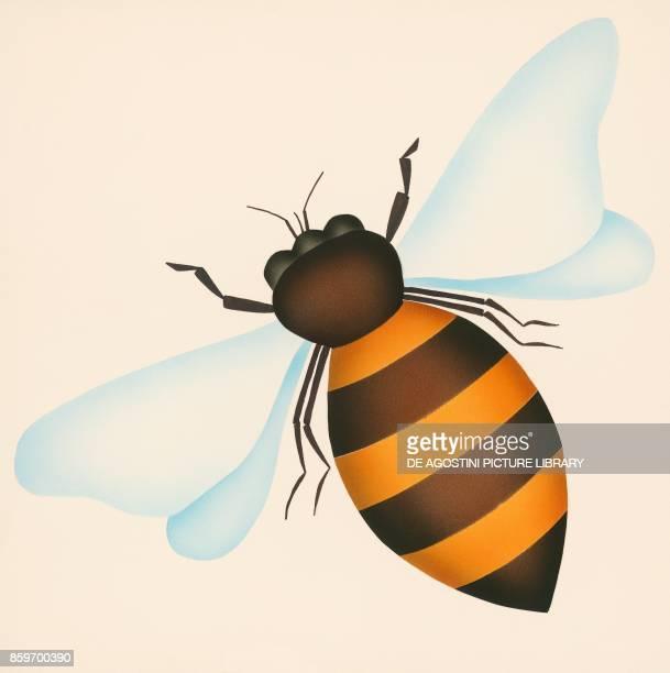 Bee children's illustration drawing