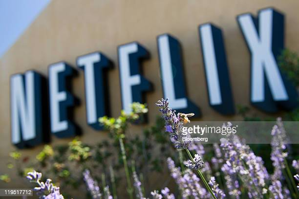 A bee climbs on a lavendar plant in front of the Netflix Inc logo displayed at the entrance to the company's headquarters in Los Gatos California US...