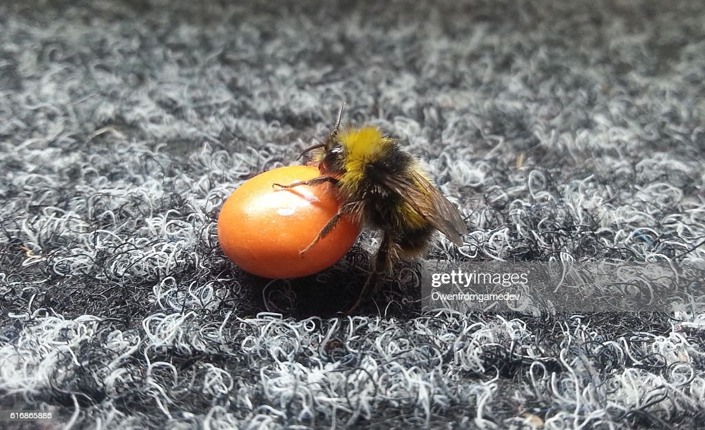 Bee Crawls onto Candy : Stock Photo