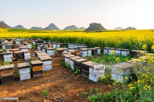 bee farm - 養蜂 ストックフォトと画像