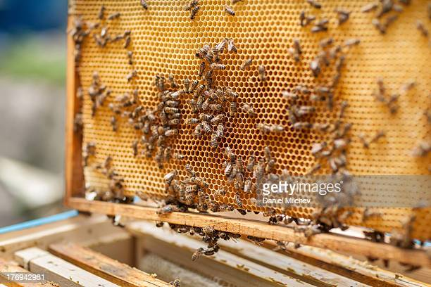 Bee hive on a frame.