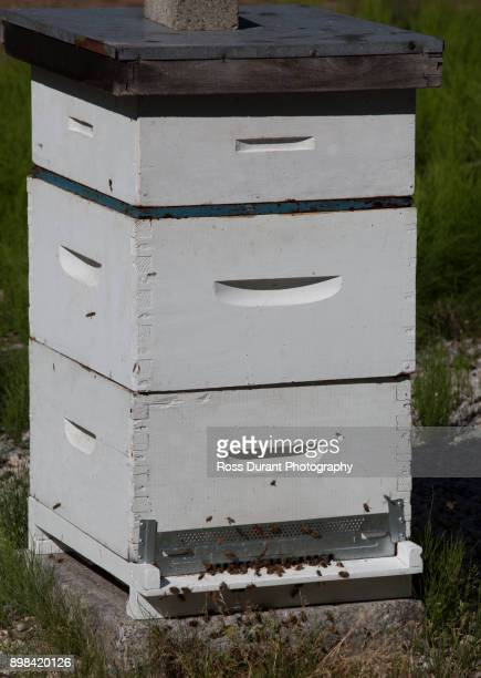 bee hive - honey ross stock pictures, royalty-free photos & images