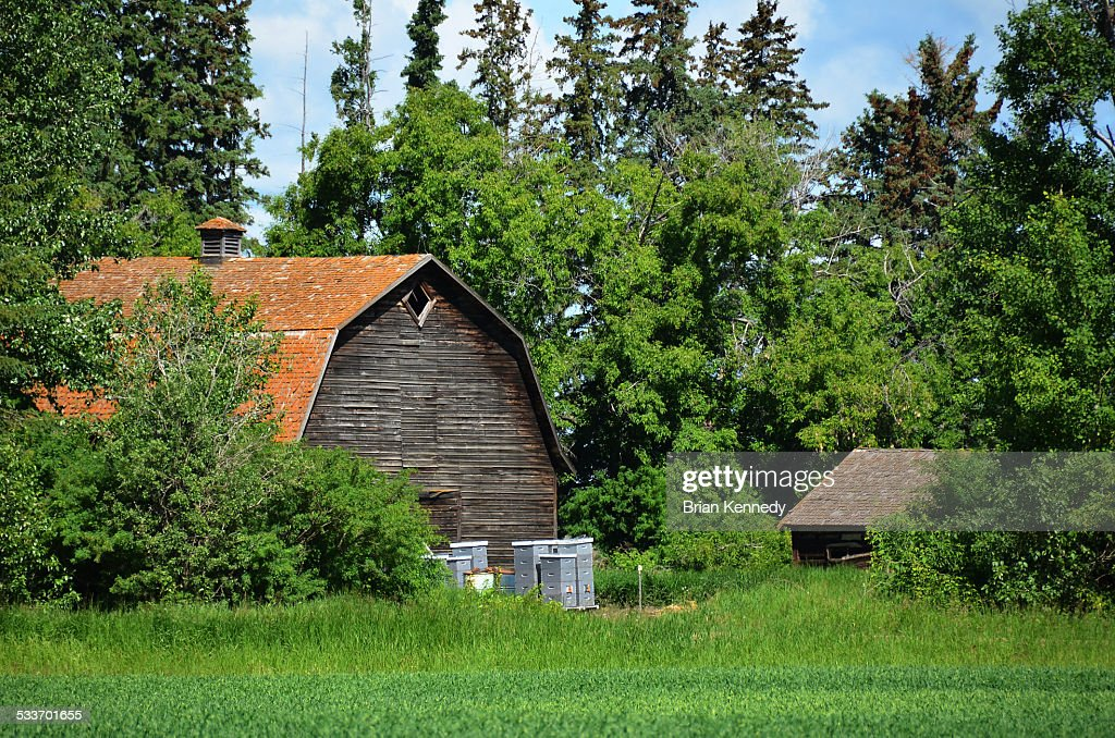 Bee hives and old barn : Foto stock