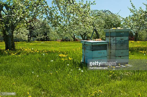 Bee hives surrounded by trees on a sunny day
