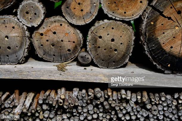 Bee hotel in spring