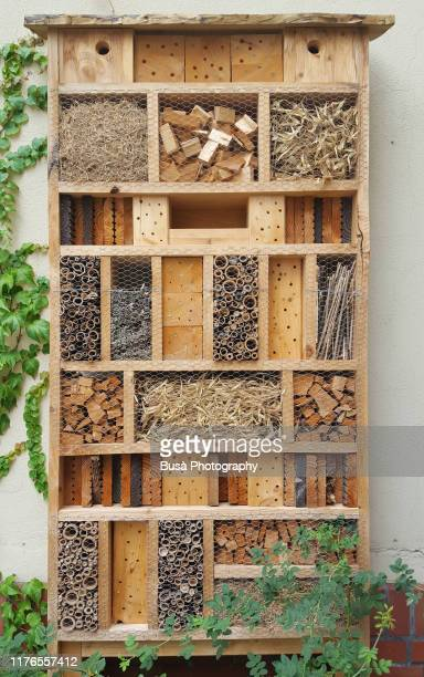 a bee hotel, insect hotel, bug box, or insect shelter made of wood - insekt stock-fotos und bilder