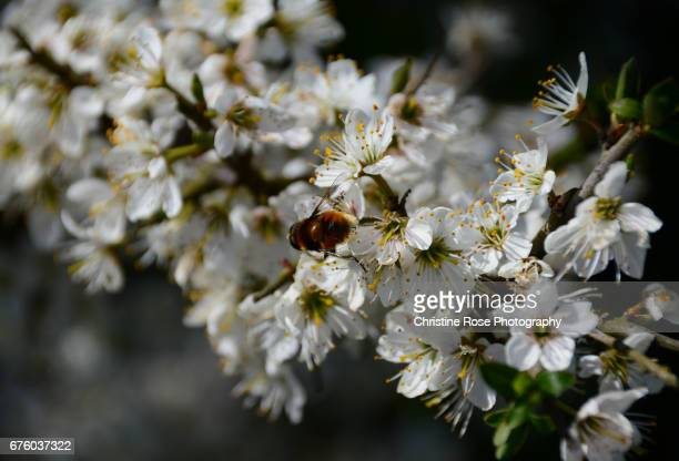 A Bee In The Blossom