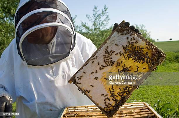 Bee difícil en el trabajo