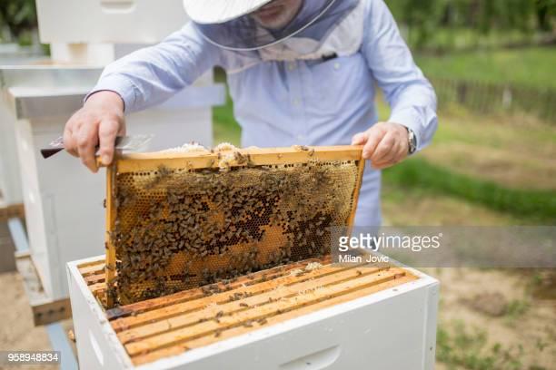apiarist ます。 - 養蜂 ストックフォトと画像