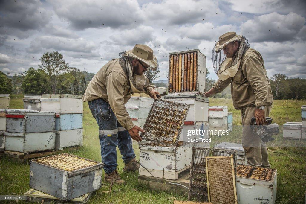 Bee keeper : Foto de stock