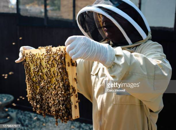 bee keeper working in his garden - agriculture stock pictures, royalty-free photos & images