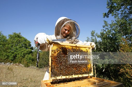 Bee Keeper Working with Bee Hives in France