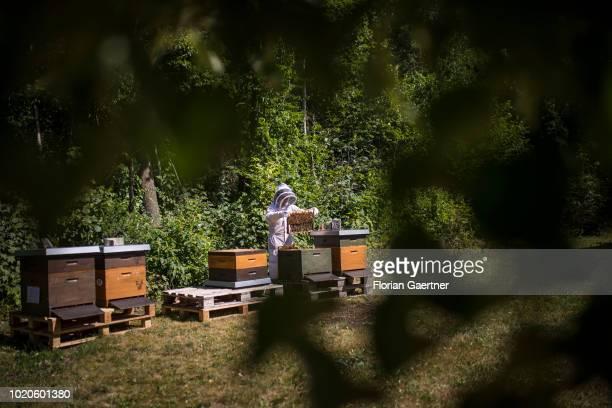 Bee keeper works with her bee colonies on June 29, 2018 in Petershain, Germany.