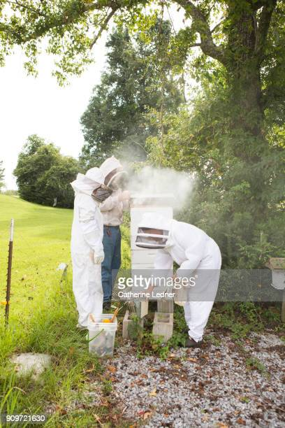 Bee Keepers collecting honey
