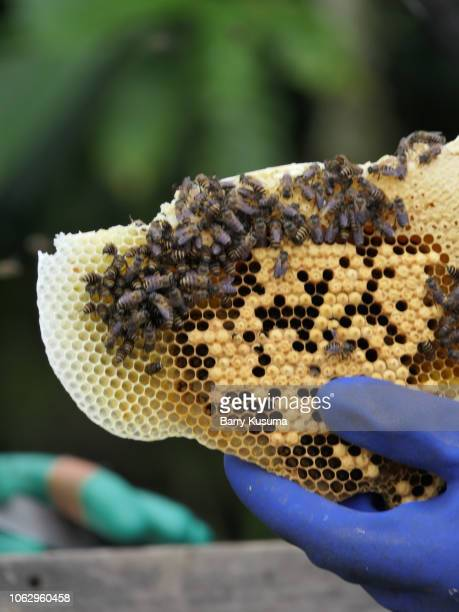bee keepers sumber urip village - barry wood stock pictures, royalty-free photos & images