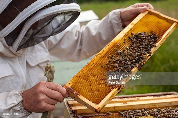 Bee Keepers working the bee hives