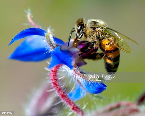 Bee Nectar!