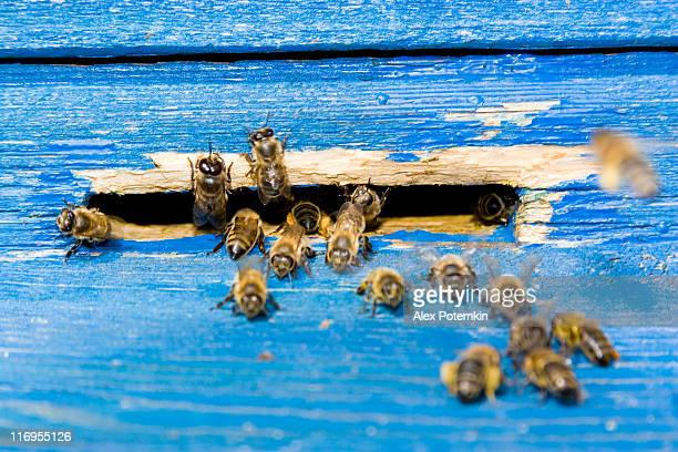 bee next to beehive on the apiary