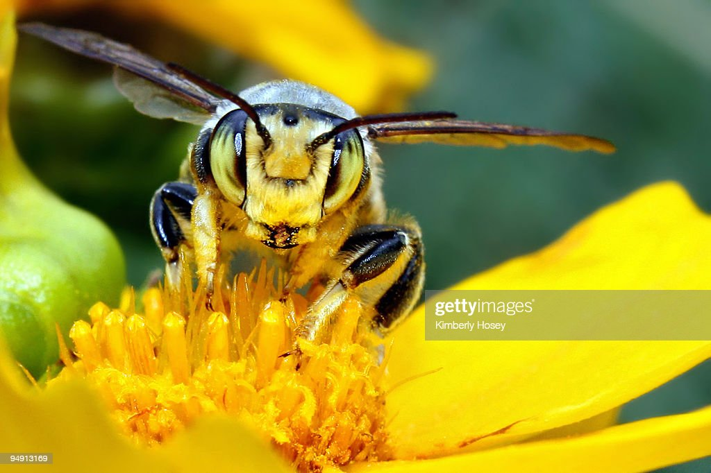 Bee on flower close-up : Stock Photo