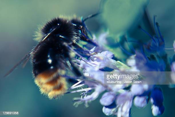 bee on flower - s0ulsurfing stock pictures, royalty-free photos & images