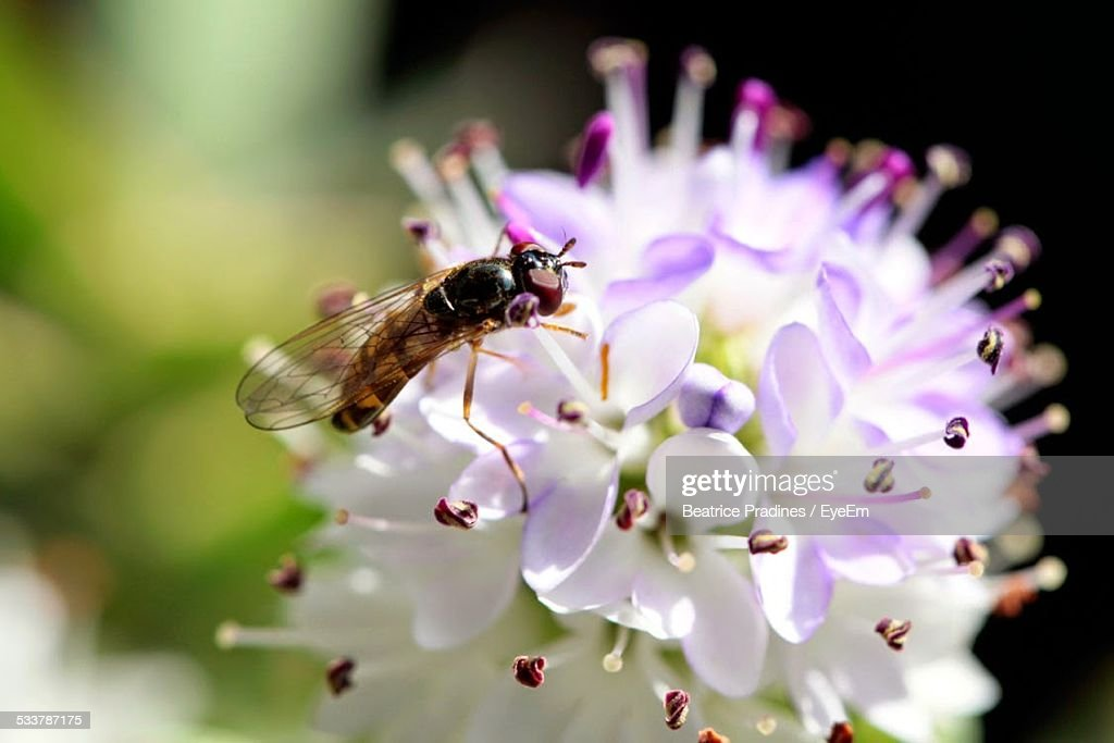 Bee On Flower : Foto stock