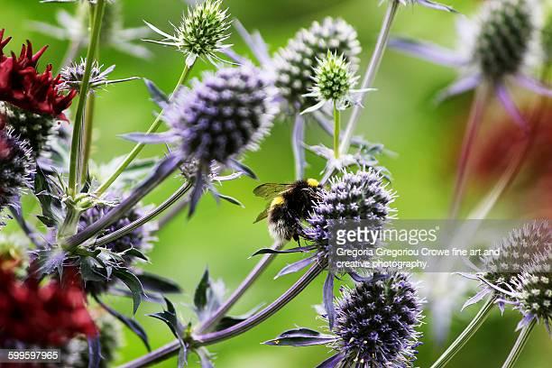 bee on flower - gregoria gregoriou crowe fine art and creative photography ストックフォトと画像