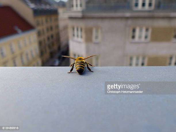 bee on ledge. - biene stock-fotos und bilder
