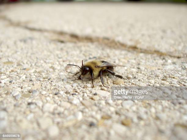 Bee on stone