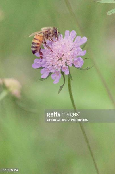 A bee on wild flowers