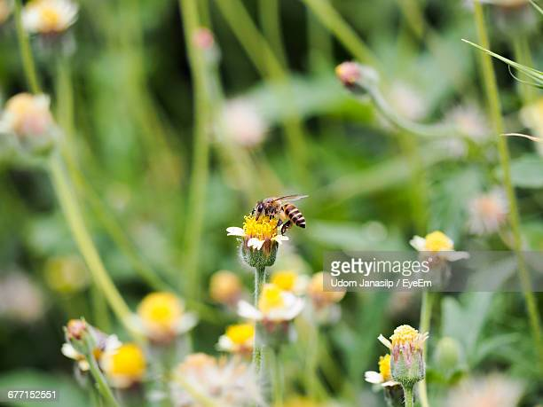 Bee On Yellow Flower At Park
