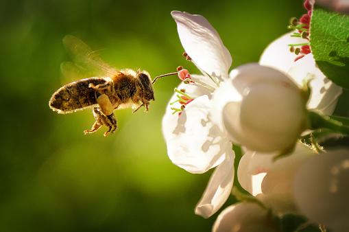 Bee 1033327956