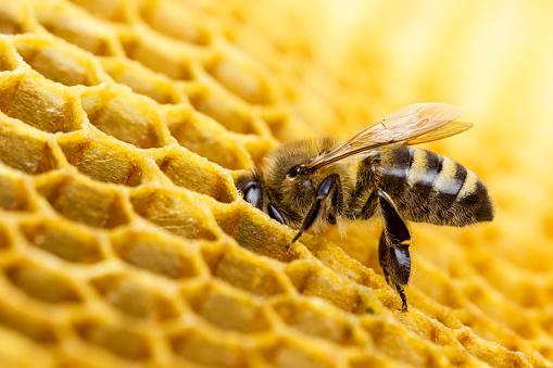 Bee 512596224