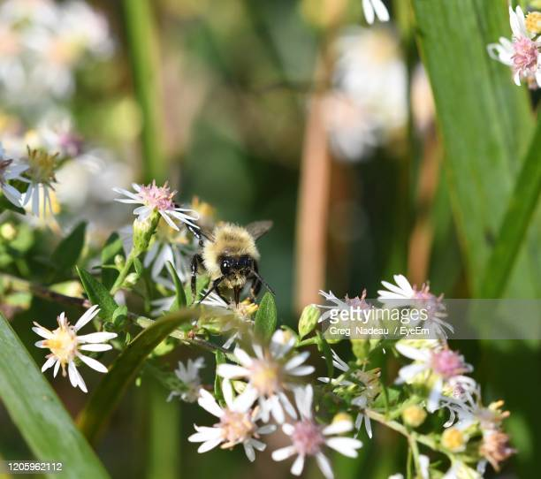 bee pollinating flower - greg nadeau stock pictures, royalty-free photos & images