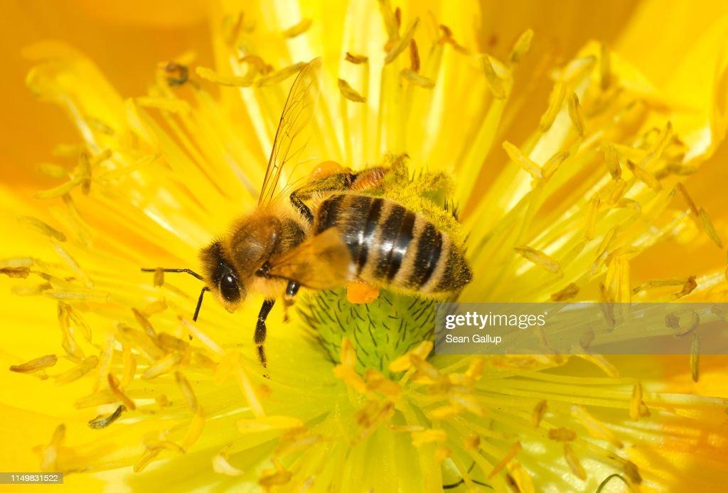 DEU: May 20 Is World Bee Day