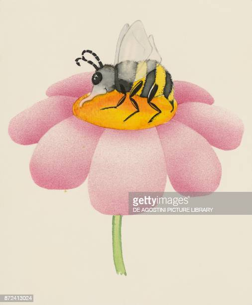 Bee sucking nectar from flower children's illustration drawing