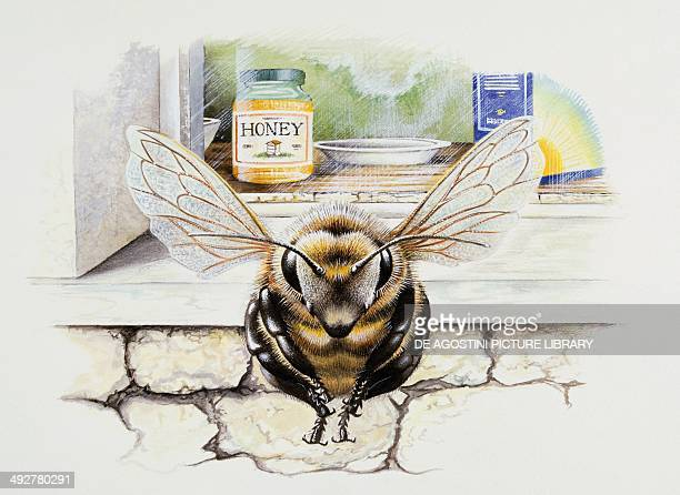 Bee with honeypot Artwork by Steve Roberts