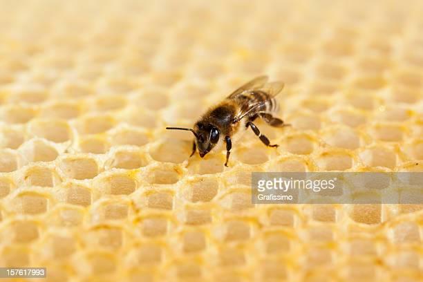 Biene Arbeiten auf honeycomb