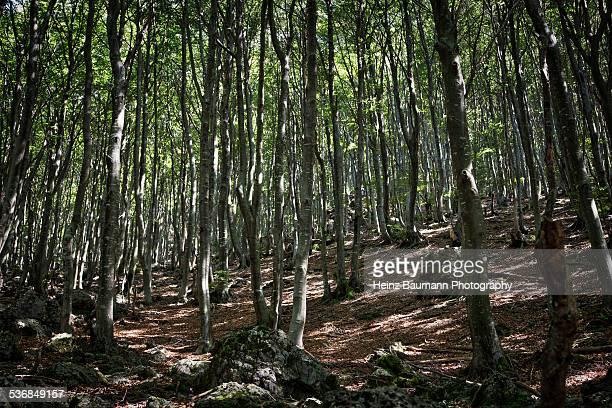 beech forest, alpe pairolo, ticino, switzerland - heinz baumann photography stock-fotos und bilder